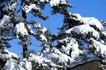 山中湖の雪景色