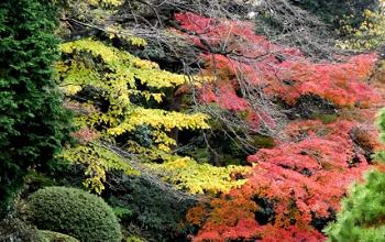 黄葉と黄葉