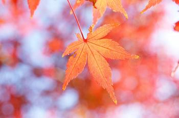 10月といえば をいろいろ集めてみました ジャパノート 日本の文化と伝統を伝えるブログ