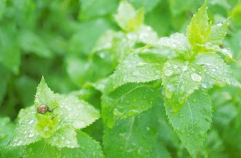 雨に濡れた葉とかたつむり