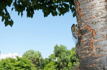 木に止まっている蝉