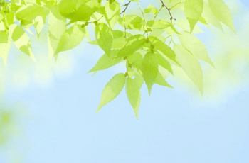 緑の葉と青空