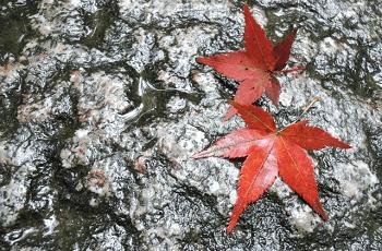 雨に濡れた石畳と紅葉の葉