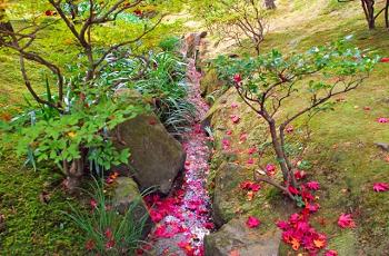 小川を流れる紅葉の落ち葉