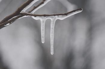 細い木の枝にできた氷柱