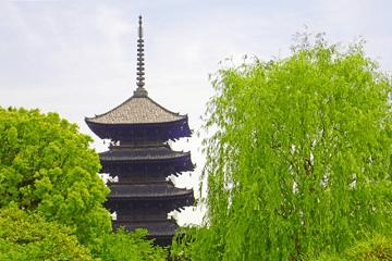 柳の木と五重塔