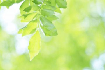 陽炎の中の緑の葉