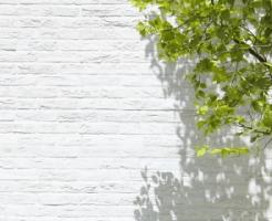 新緑と白い壁