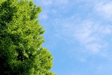 鮮やかな新緑と青空