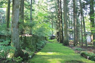 緑に包まれた森の中の道