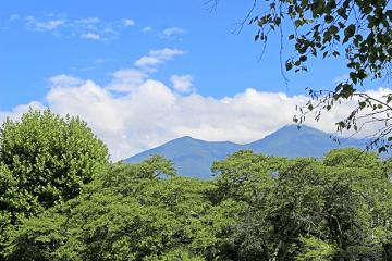夏の山の風景