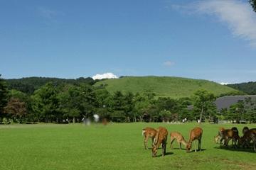 夏の草原の鹿の群れ