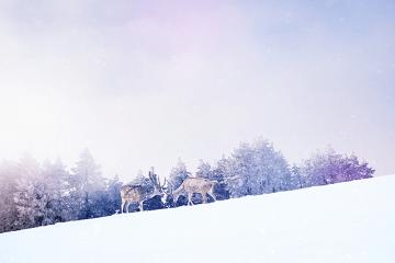 雪山の二匹の鹿