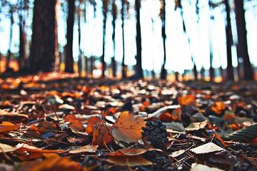 枯葉が積もった森の道