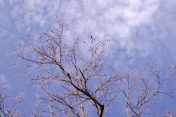 冬の枯れ木