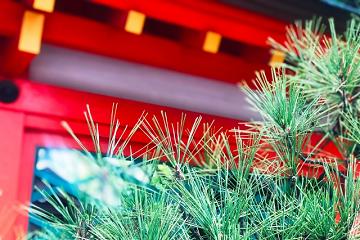 朱塗りの門と松の枝葉