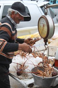 Selling lobsters. Photo Credit: Wikimedia Commons