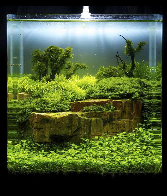 Decorazione Originale Acquario 17 Idee Fantastiche