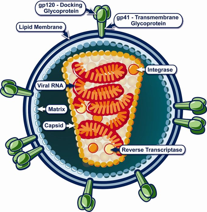 Structure_of_HIV