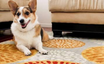 Best Wet Vacuum for Pet Urine