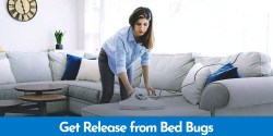 Best Vacuum for Bed Bugs