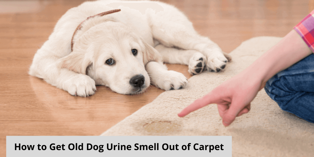 How to Get Old Dog Urine Smell Out of Carpet – A Complete Guide