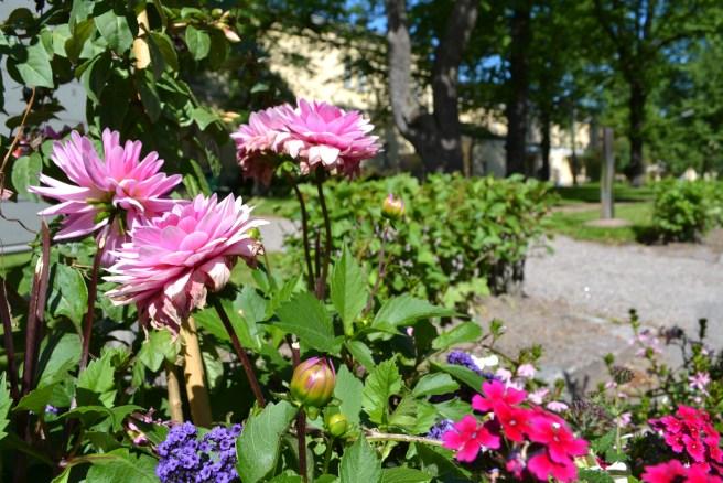 Kaisaniemen Kasvitieteellinen puutarha. Kuva: Nina Finell / Helsingin Yliopisto.