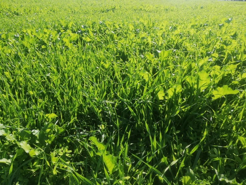 Green grassy land