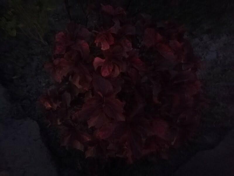night flowers ideal inspiration inspiration motivation