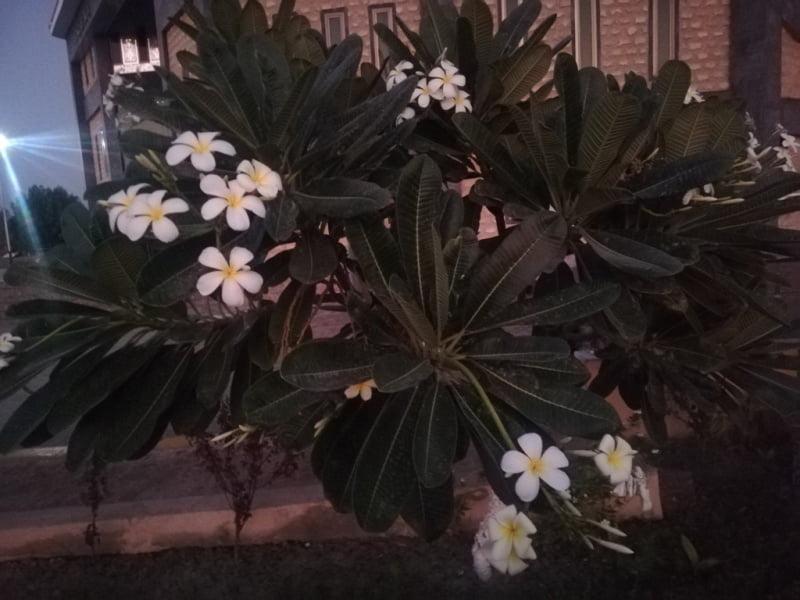 Yellow white Flowers ideal inspiration inspiration motivation