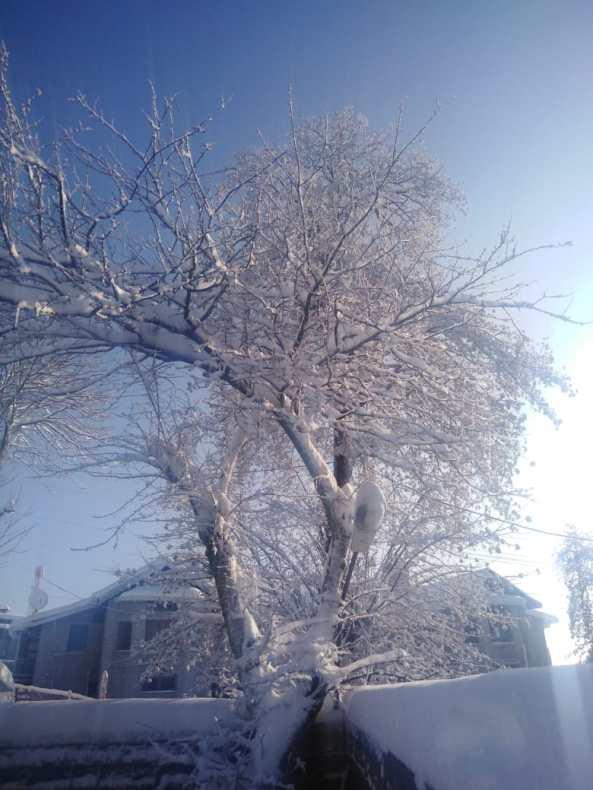 Snow covered tree snowflake