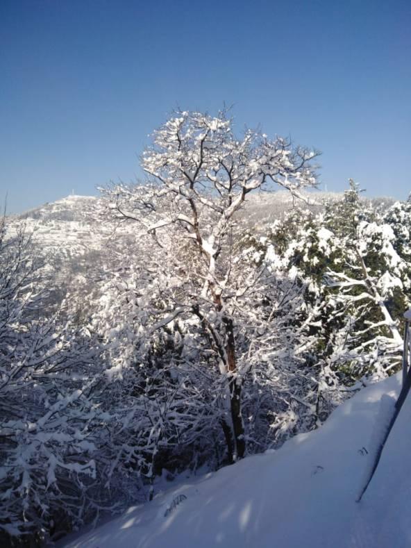 Snowfall in Lower Topa
