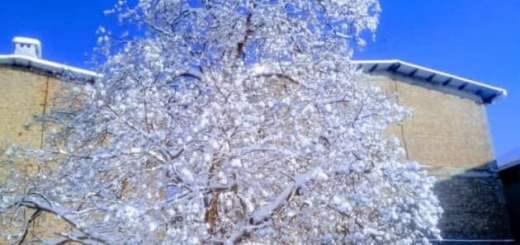 Snowflake, Snowfall, Snow