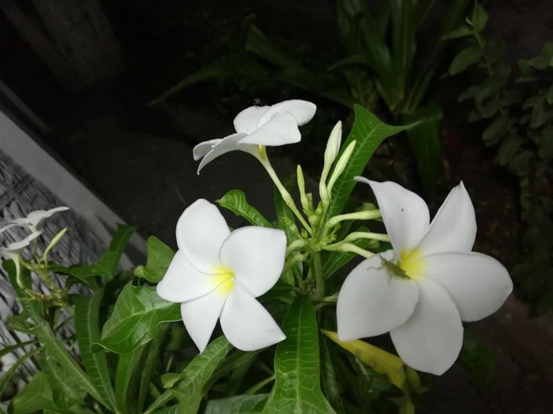 white flower names