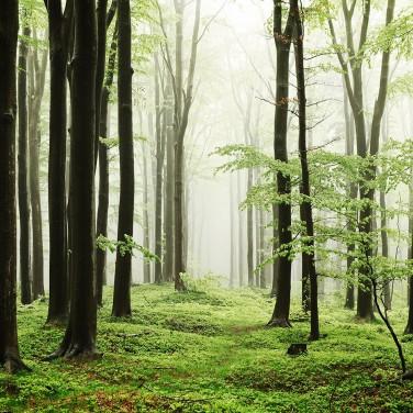 coordonne-woods3