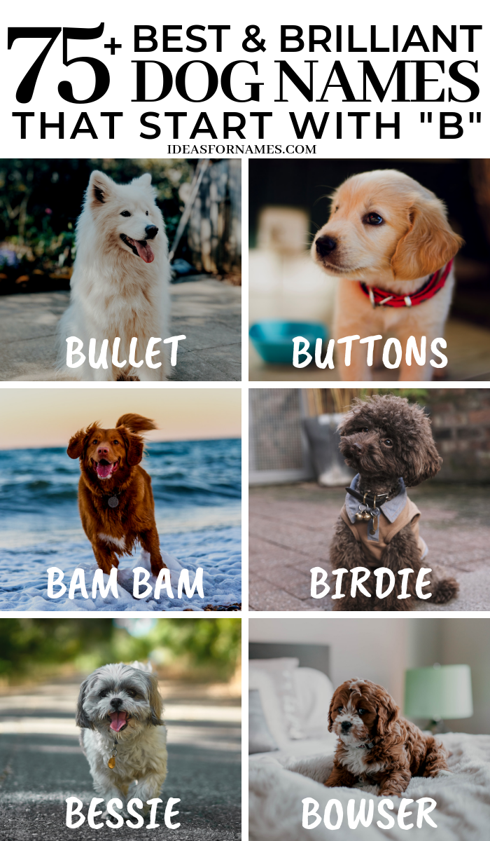 50+ Best And Brilliant Dog Names That Start With B, Letter B Name for new puppy #dog #dogs #doglover #dognames