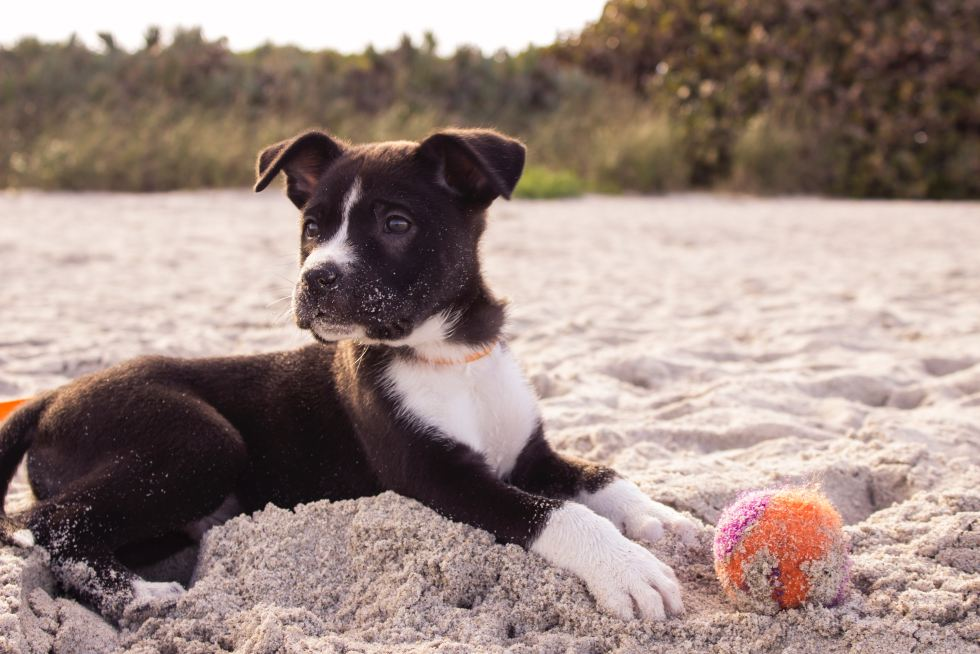 Marvelous Dog Names That Start With M