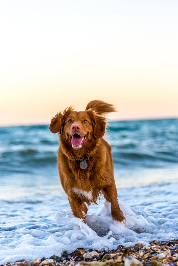 Best And Brilliant Dog Names That Start With B