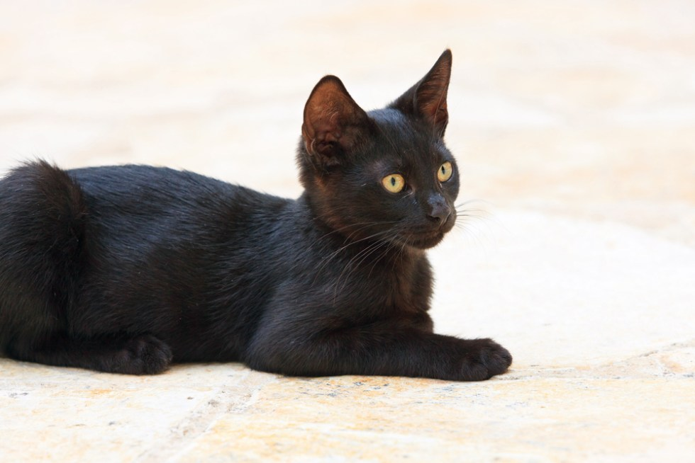 250+ Best Black Cat Names That Are Just Plain Brilliant