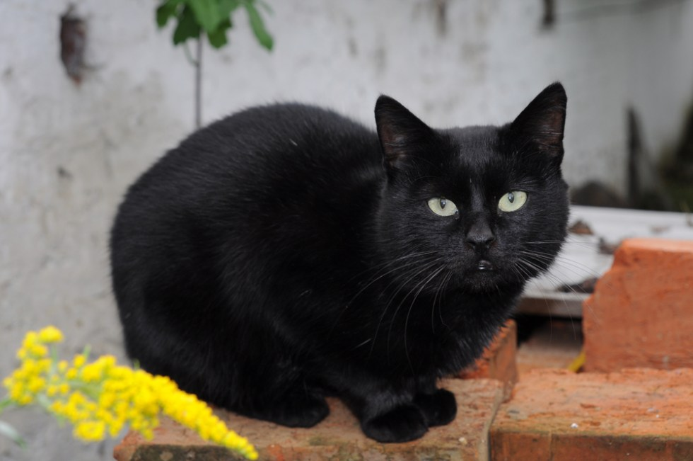 Best Black Cat Names That Are Just Plain Brilliant