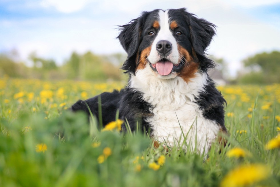 Big Dog Names For Your Lovable Large Breed Pup, unique name ideas for large male and female dogs