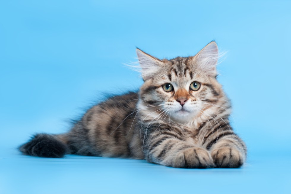 250 Disney Cat Names That Are Just Meow Gical Ideas For Names