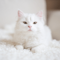 Wonderful Names For White Cats And Kittens, Cute and Unique Names for White Kitty