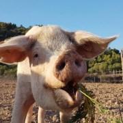 animales-solidaridad-santuario