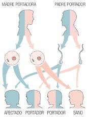 enfermedades-raras-sanfilippo-2