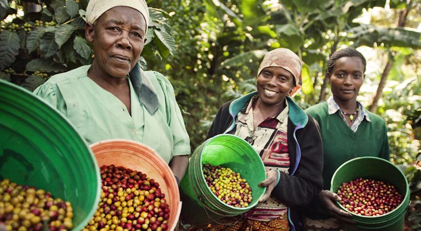fairtrade-comercio-justo-ods