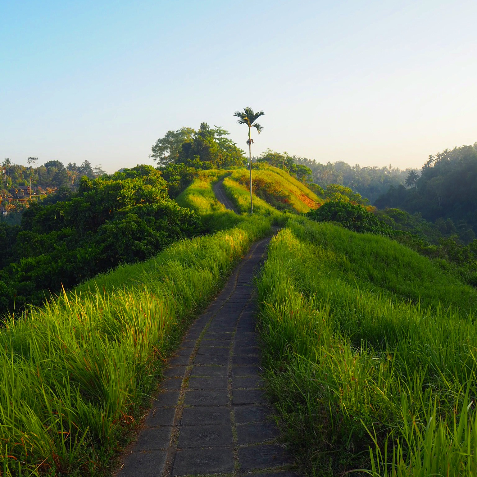 An early morning hike on Campuhan Ridge in Bali