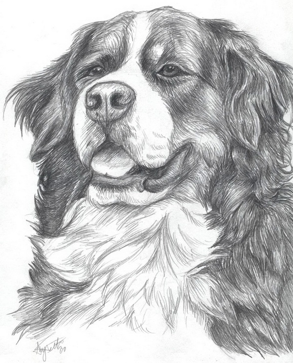 10 Lovely Dog Drawings For Inspiration 2017