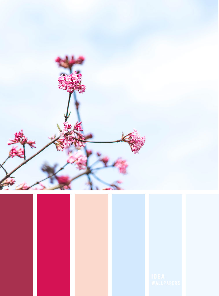 Berry Hues & light blue sky color inspiration, colour palette #color #colorpalette
