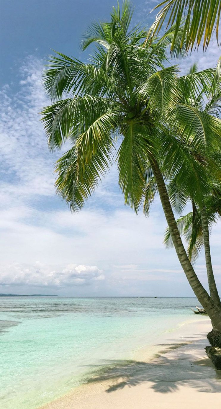Coconut tree on the beach iphone wallpaper